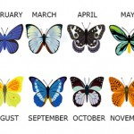Find Out What Your Birth Month Butterfly Reveals About You
