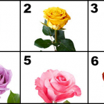 Choose The Most Beautiful Rose And Discover The Most Beautiful Secrets Of Your Love Life