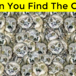 Can You Spot The Cat Hiding In Plain Sight Amongst The Owl?
